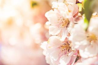 Wonderful-spring-blooms_free_stock_photos_picjumbo_HNCK2469-1080x720